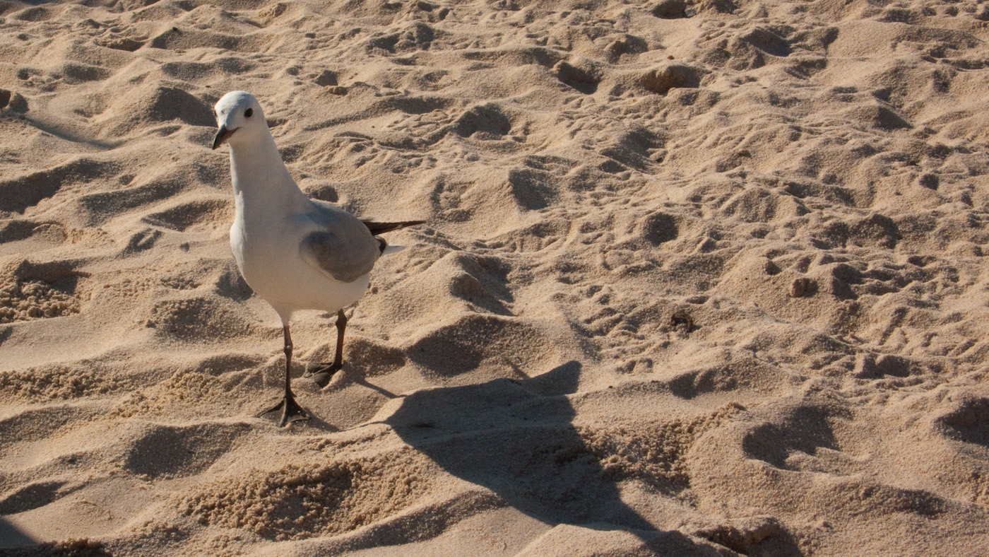 Grand Beach Bird=
